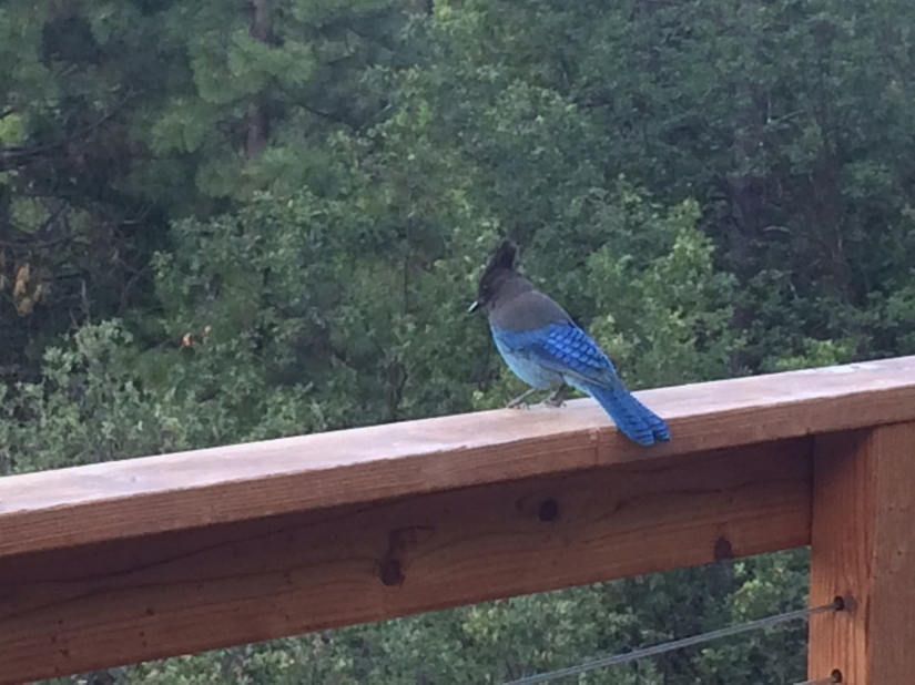I met a hummingbird and this stellar blue jay.